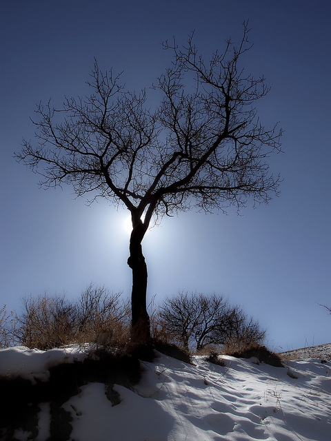 Tree and winter