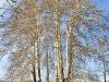 TreeBuddies