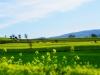 Mazandaran spring - بهار مازندران