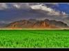 Hay field - يونجه زار