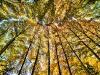 The Beauty of Autumn - زيبائيهاي پائيز