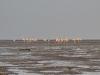 Bandar Abbas beach - ساحل بندرعباس