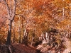 Torghabeh Autumn